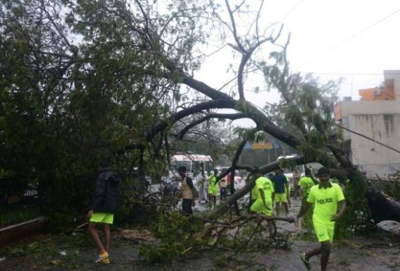 After cyclone Vardha, flies become a big threat to Chennai